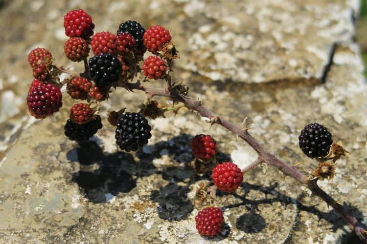 High angle view of berries over rock