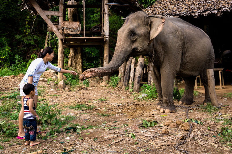 A mother and her son feeds an elephant at an elephant trekking camp in Mae Hong Son, Thailand. Animal Feeding Elephant Elephant Camp Elephant Trekking Leisure Activity Mae Hong Son Mother And Son Nature Outdoors Thailand