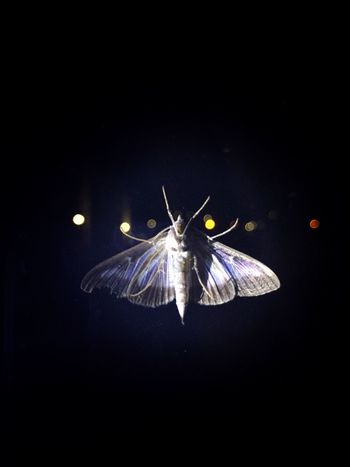 Wildlife Animals In The Wild Night Butterfly Dark Multi Colored Life Is Beautiful Moments Light And Shadow Darkness And Light Light In The Darkness Colorful Life