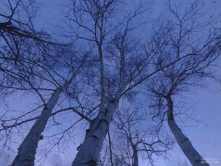 Bare Tree Beauty In Nature Birch Tree Blue Sky Background Branch Day Low Angle View Nature Night No People Outdoors Sky Tranquility Tree Winter Trees Wintertime