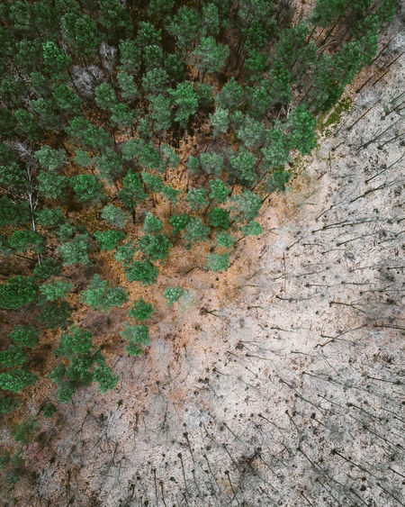 Autumn DJI X Eyeem Decisions Diagonal From Above  Green Color Old Vs New Winter Aerial View Bare Trees Brown Contrast Day Dronephotography Dull But Beautiful Fall Fall Vs Winter Forest Nature Orange Ground Outdoors Pattern Separation Somber Tree The Great Outdoors - 2018 EyeEm Awards 17.62°