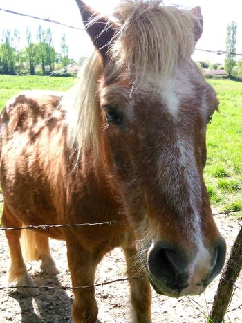 My little poney 😁 😁 😁 Relaxing Taking Photos Hi! That's Me Check This Out Enjoying Life Hanging Out Hello World Horse Cheval Animaux Animals Faces Of EyeEm Promenade Nature France Getting Inspired April French Getting Creative First Eyeem Photo Mypointofview Showcase April ByJarod Poney 💚