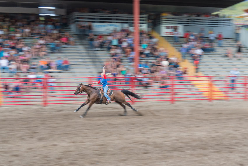 Williams Lake, British Columbia/Canada - June 30, 2016: the winner of the Wild Cowgirl Race raises her arm in victory as she crosses the finish line at the 90th Williams Lake Stampede 90th Williams Lake Stampede Arena British Columbia, Canada Finish Line  Horse And Rider Racing Rodeo Spectators Wild Cowgirl Race Woman Audience Candid Cowgirl Crowd Dangerous Documentary Editorial  Extreme Sports Fast Horse Race Speed Stampede Stands Victory Winner