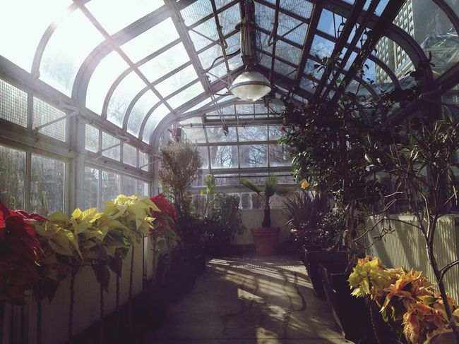 Warm Light Chasing Light Botanical Gardens Toronto EyeEm Best Shots