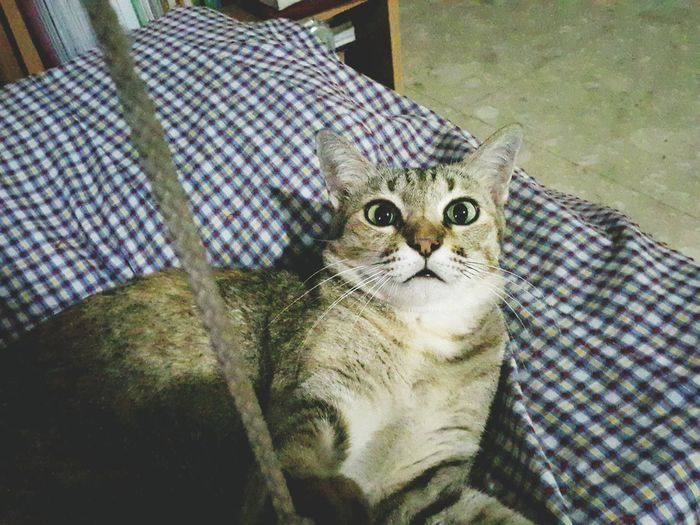 What?!! No night bite for me tonight??!!!! Pets Domestic Cat Domestic Animals Close-up Cat Shocked Stunned What? Funny