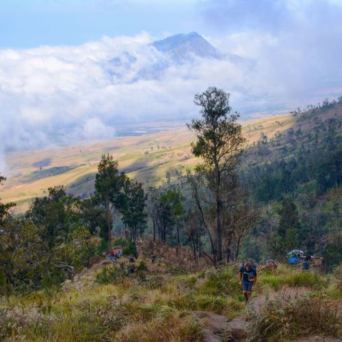 MOUNT RINJANI, LOMBOK INDONESIA. SEPT 16th 2017- A porter hikes up the mountain, carrying the tourist stuff via Sembalun route. Mount Rinjani Sembalun Route Hiking Hikingadventures Wallpaper Background Tree Mountain Hiking Pine Tree Pinaceae Forest Sky Landscape Cloud - Sky Grass Hiker Hiking Pole Trail Backpack Adventure Rocky Mountains