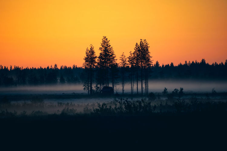 Foggy morning Tree Beauty In Nature Tranquil Scene Scenics - Nature Orange Color Sky Tranquility Sunset Silhouette Fog No People Idyllic Environment Landscape Nature Outdoors Hazy  Nature_collection Freshness Scenics Summer Photography Field Clear Sky Forest