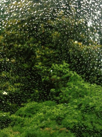 Rain Rainy Day Nature Abstract Summer