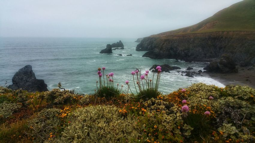 My path is blessed with the beauty of wildflowers & the ocean Zen Background Meditation Timeless Copy Space Moment Wildflowers Headland Foreground Focus Distance Fog Mists Pink Orange Turquoise Sea Ocean Passion Flower Water Sea Beach Fog Sky Horizon Over Water Landscape Plant Rock Formation Rocky Coastline Geology Seascape