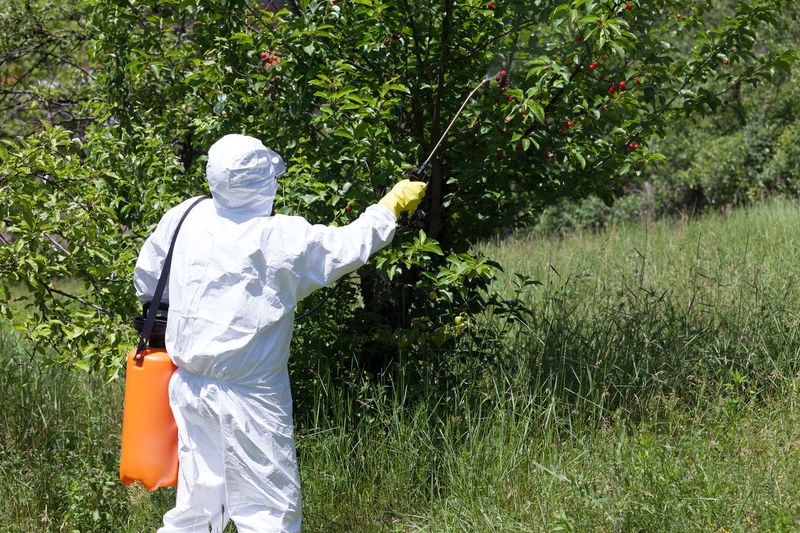 Man spraying toxic pesticides or insecticides in vegetable garden Adult Agriculture Day Farm Farm Life Fertilizer Garden Gardening Grass Herbicide Men Nature Non Organic Nozz Outdoors People Pesticides Pollution In My World Protective Gloves Protective Suit Tree