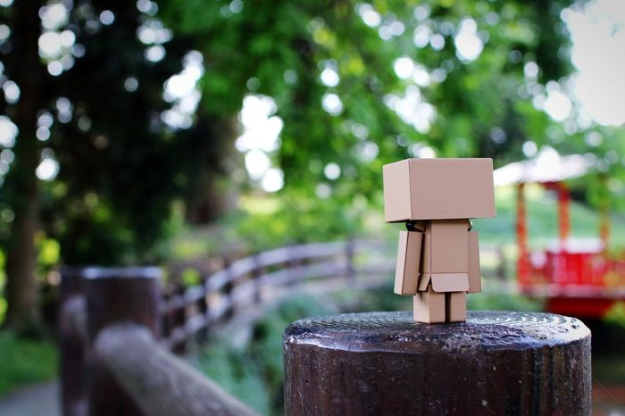 落ちたら鯉の餌。 Danbo EyeEm Gallery Cheese! Shallow Focus Japanese Shrine Tree Nature