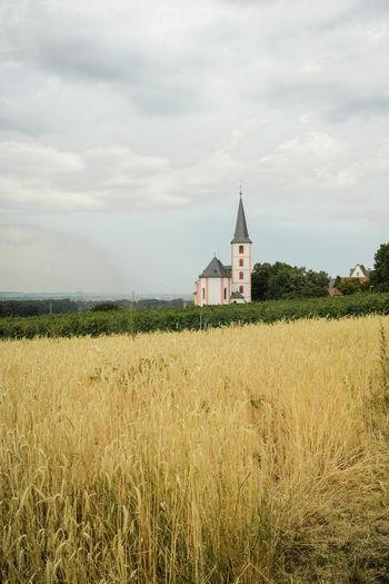 Roggenfeld
