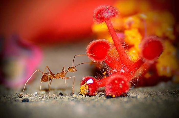 #ants #macrophotography #macroinsects Animal Wildlife No People Animals In The Wild Insect Close-up Animal Themes Red Nature