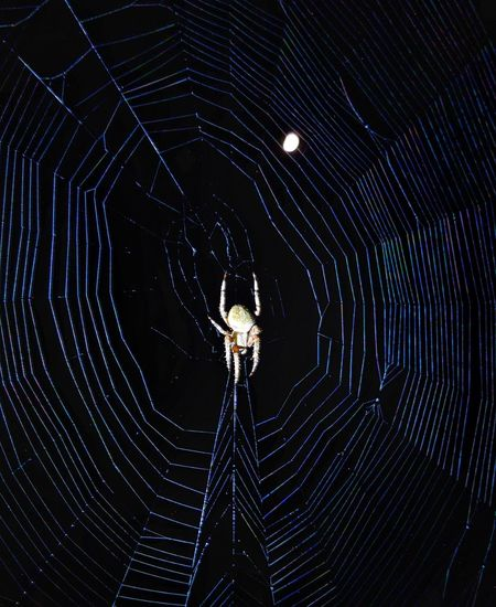 spider, his web
