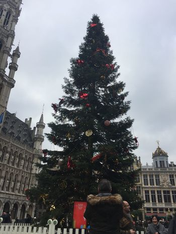 Brussels, Belgium Grand Place Christmas 2016 tree. Belgian  Belgium Brussel Brussels Brussels Town Hall Bruxelles Christmas Christmas Around The World Christmas Decoration Christmas Tree Christmas Trees Christmastime Grand Place Grand Place Bruxelles Grand Place Christmas Grand Place Square Seasonal Travel Destinations Xmas Xmas Decorations Xmas Time Xmas Tree