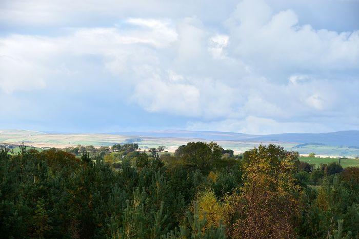 Taking Photos A66 Trees Landscape Cloud - Sky Nikon D5500