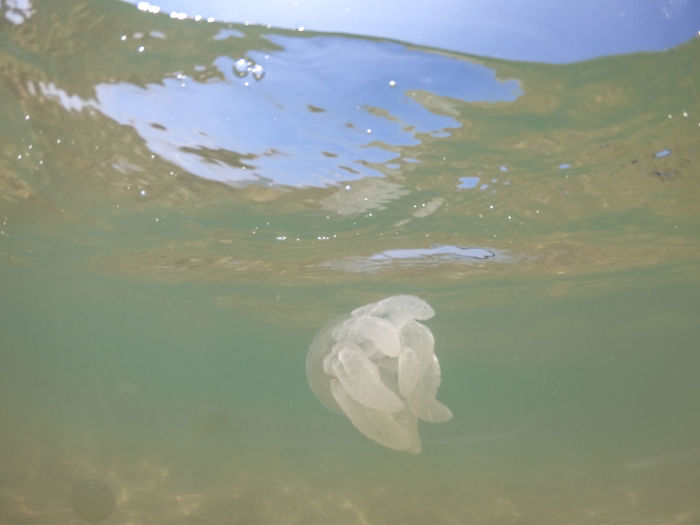 Jellyfish Gopro