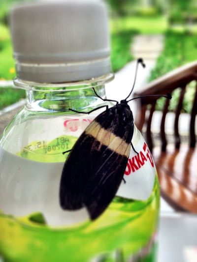 Wildlife Bugs Close Up Macro Nature