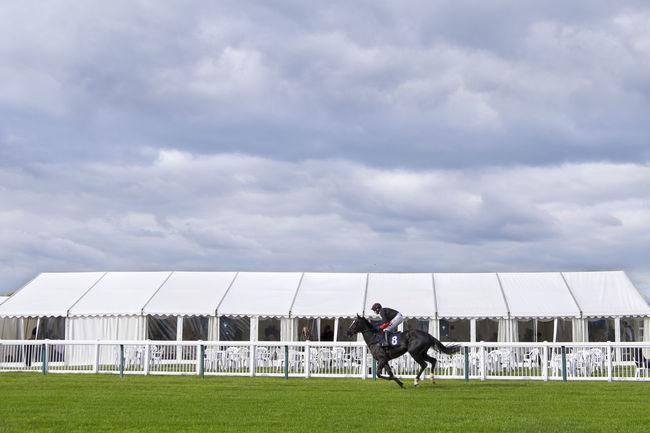 Horse and jockey Horse Horse And Jockey Horse And Rider Horse Race Horse Races Horse Racing Jockey Racecourse Sport Sports
