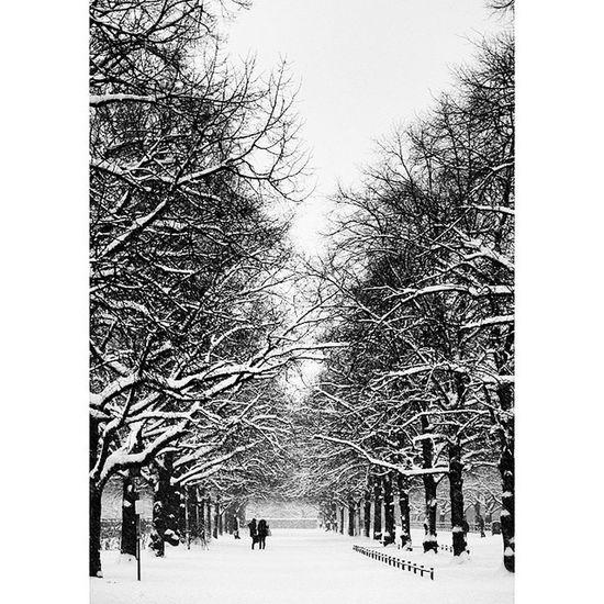 Beautiful Atmosphere . The Hofgarten Garden covered in snow. near odeonsplatz. snowing, white winter. munich münchen bayarn Deutschland Germany. Taken by my SonyAlpha dslr A57. ثلج شتاء حديقة ساحة بافاريا ميونخ المانيا