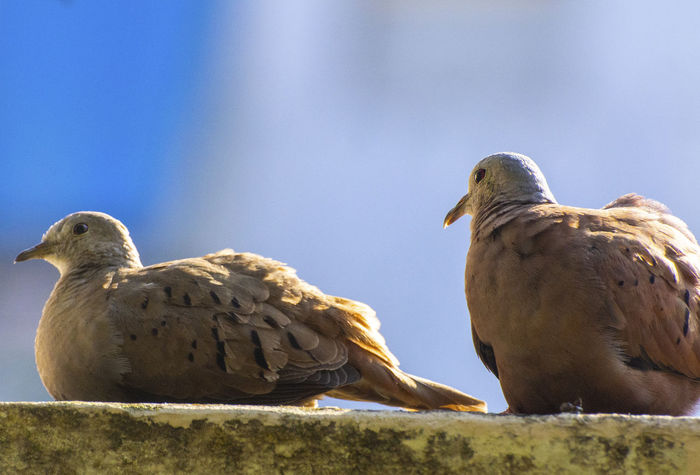 The couple of birds. EyeEm Nature Lover EyeEm Selects EyeEm Gallery EyeEmNewHere Animal Animal Family Animal Themes Animal Wildlife Animals In The Wild Beak Bird Clear Sky Close-up Day Group Of Animals Low Angle View Mourning Dove Nature No People Outdoors Perching Sky Solid Two Animals Vertebrate