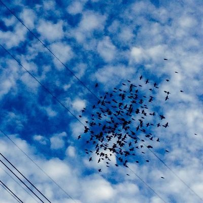 Birds Clouds And Sky