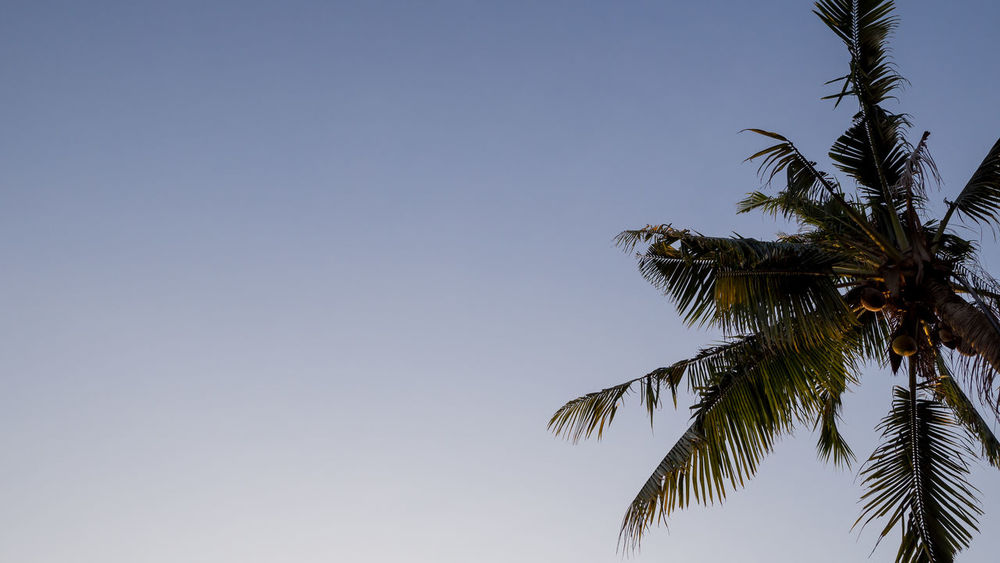 stand Beauty In Nature Blue Clear Sky Copy Space Growth Leaf Low Angle View Nature No People Outdoors Palm Tree Scenics Sky Tree