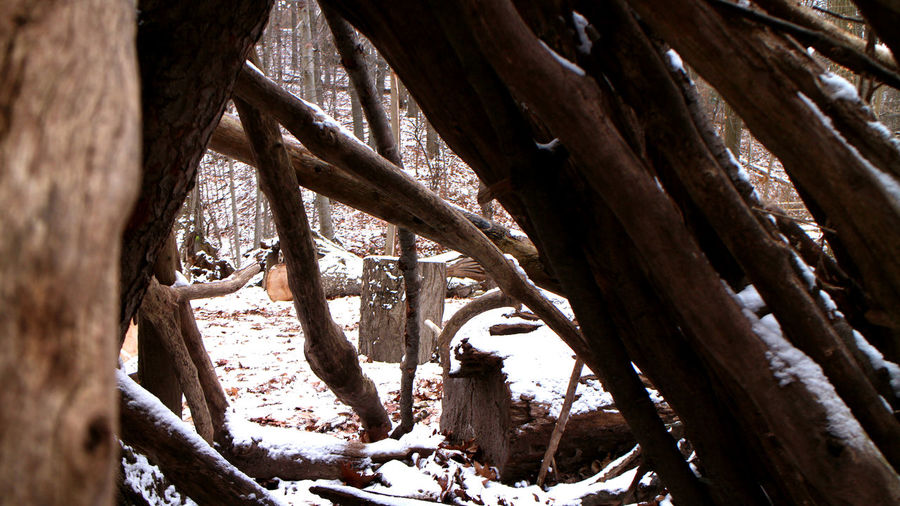 Low angle view of tree trunk during winter