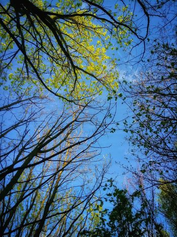 Tree Nature Sky No People Low Angle View Beauty In Nature Branch Blue Growth Outdoors Day Backgrounds Tranquility Clear Sky Close-up Treetop Freshness Tranquil Scene Dramatic Sky The Way Forward Tree Scenics Sunlight Beauty In Nature Green Color