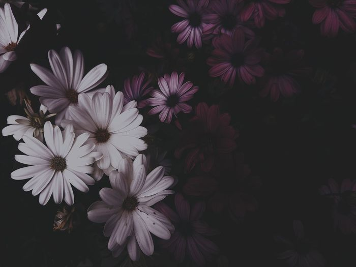 Agosto - Flowers I Flower Moody Nature Retro Nature Italy Botanical Moody Summer Green Aesthetics Garden Photography secret garden Quiet Europe EyeEmNewHere EyeEm Selects Flower Head Flower Tree Petal Blossom Close-up Plant Flowering Plant Blooming Plant Life