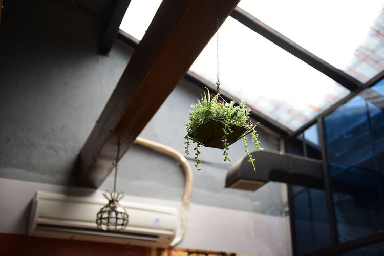 Low Angle View Of Hanging Houseplant At Home