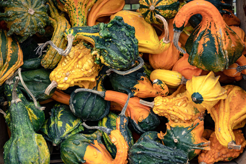 Food And Drink Pumpkin Food Healthy Eating Vegetable Freshness Market Wellbeing Retail  No People Day Backgrounds Choice Squash - Vegetable Large Group Of Objects Full Frame Business High Angle View Variation Organic Outdoors Pumpkins Orange Color Green Color