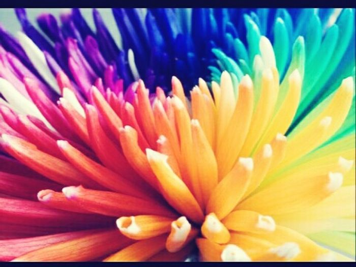 Colorfull Into The Flower