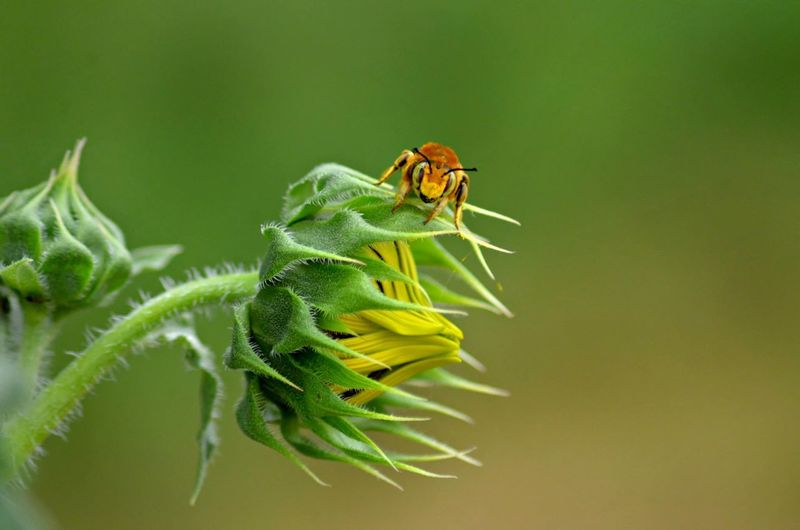 Close-up of insect on flower bud