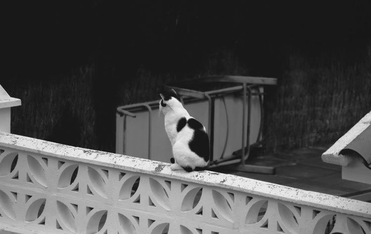 Yin and Yang Doble Sides Color Light And Dark Monochrome Cat Photography Blackandwhite