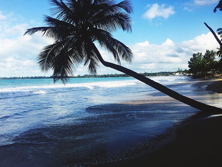 Adventures Beautiful Nature Beach Palm Tree Sand View