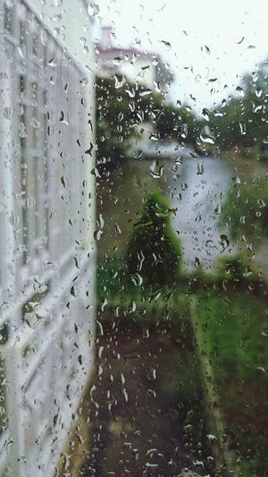 rain Rear Garden Of Hope