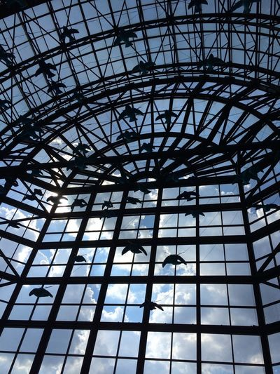 NYC Le District Window Birds Windows Sky Clouds