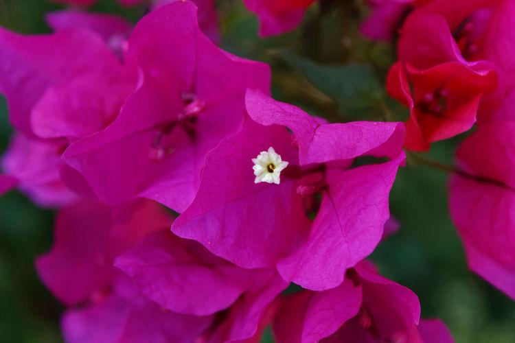 Close up of