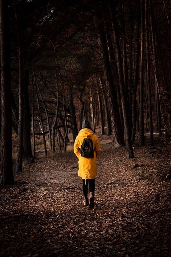 MOOD. Forest Tree Full Length One Person Plant Nature Autumn Mood Rear View Land Standing Real People Lifestyles Walking Clothing Footpath Tree Trunk Outdoors