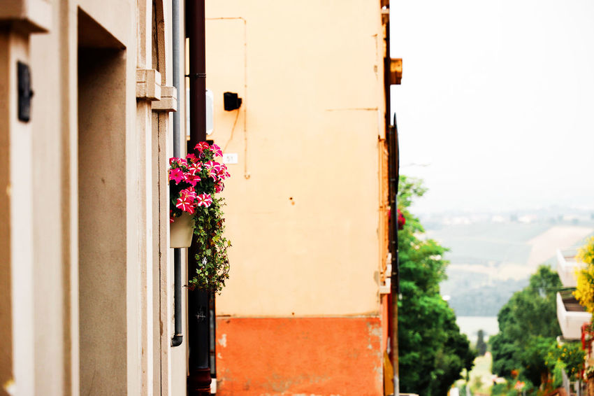 View Wall Architecture Bertinoro Building Building Exterior Built Structure Close-up Day Detail Door Entrance Flower Flowering Plant Focus On Foreground Freshness Growth Italy Lovely Nature No People Outdoors Plant Potted Plant Residential District Vulnerability  Wall - Building Feature Window