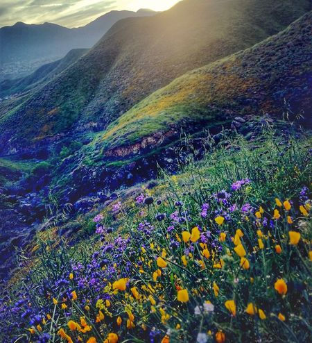 Multi Colored No People Growth Nature Day Close-up Outdoors Tree Sky Beauty In Nature Scenic Mountains Landscape Nature Flowers Floral View