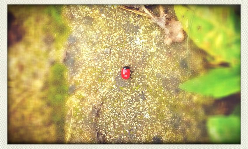 In red. Red Insects  Nature Animal_collection
