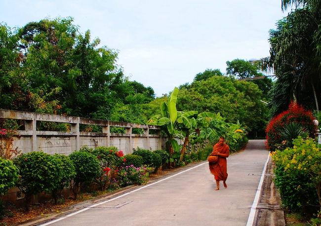 Countryside Landscape Monk  Alm