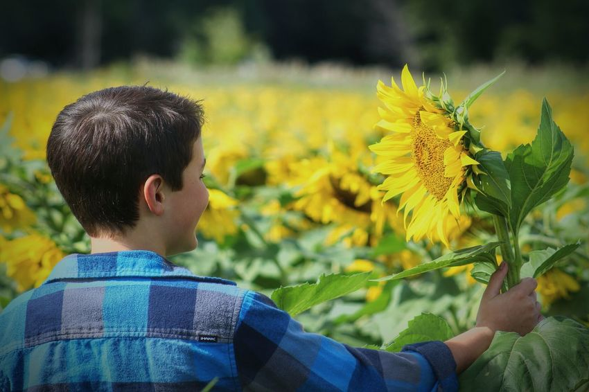 Sunflower Outdoor Photography Nature Makes Me Smile Nature On Your Doorstep Naturelovers Flower Collection EyeEm Gallery EyeEm Flower Summer ☀ Outside Nature Flowers Yellow Summer Flowers Son Boy One With Nature Colour Of Life
