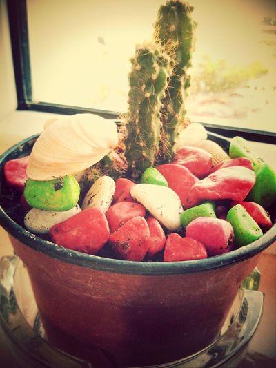 kaktusss ^^