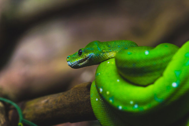 Animal Collection Animal Head  Close-up Green Green Color Nature No People One Animal Selective Focus Vibrant Color Wildlife Zoology