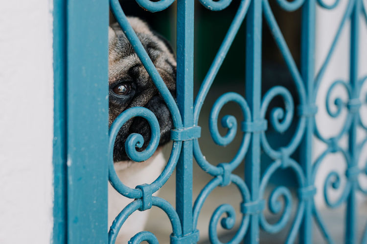 Close-Up Of Dog Looking Through Metallic Window