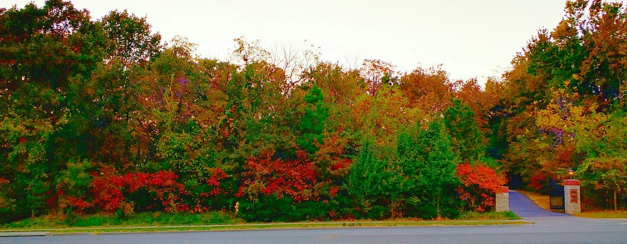 autumn, tree, change, leaf, growth, outdoors, beauty in nature, nature, no people, day, road, tranquility, scenics, plant