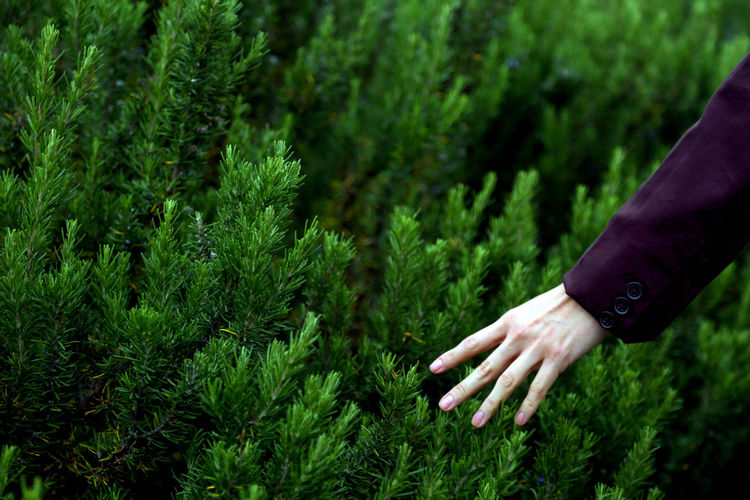 Midsection of person touching plants